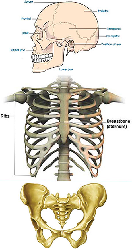 flatbones