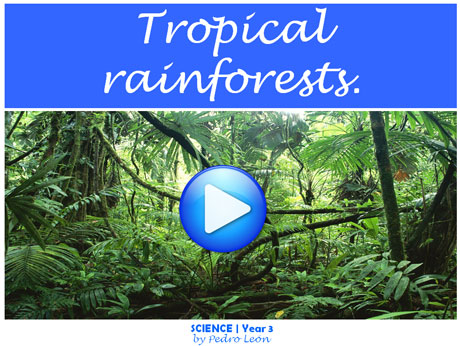 tropical3rainforests