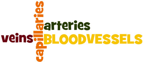BloodVessels_wordle