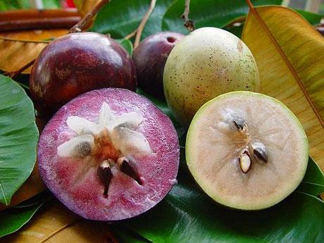 fruitaroundseed